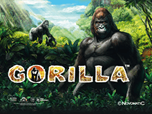 Аппарат на деньги Gorilla